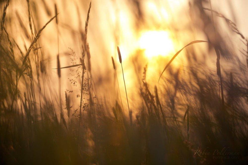 sunsets-sun-macro-shine-summer-sunlight-sunset-field-grass-dawn-dusk-up-nature-sunrise-photography-abstract-bokeh-close-sunshine-light-winter-wallpaper-computer.jpg