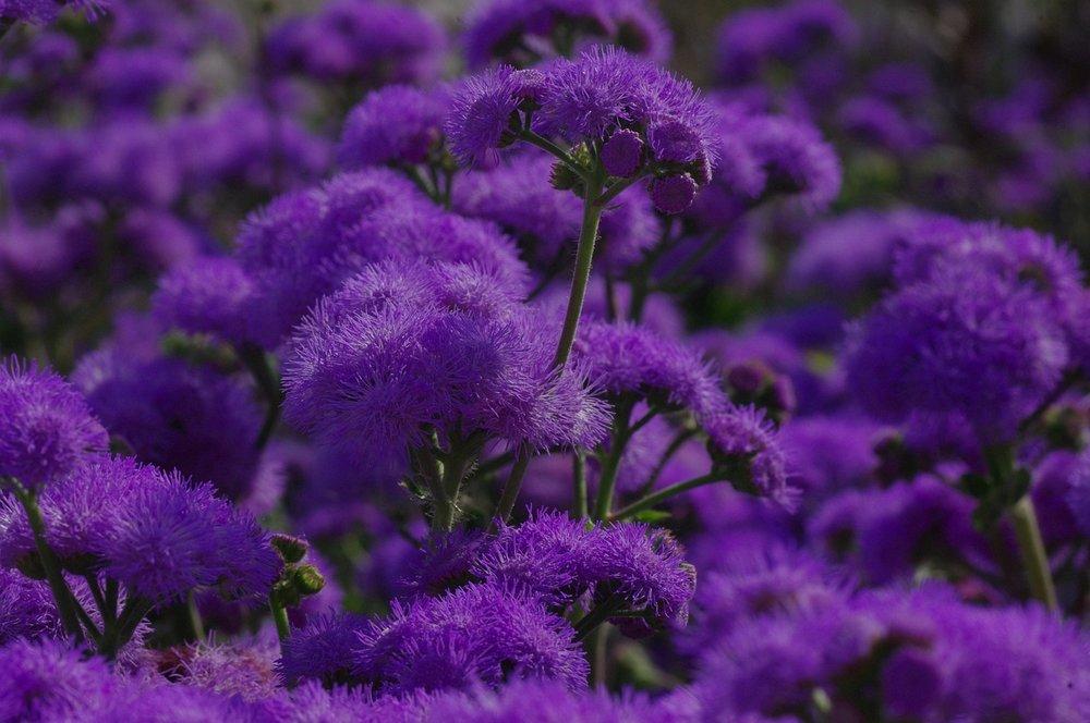 blossom-165998_1280.jpg