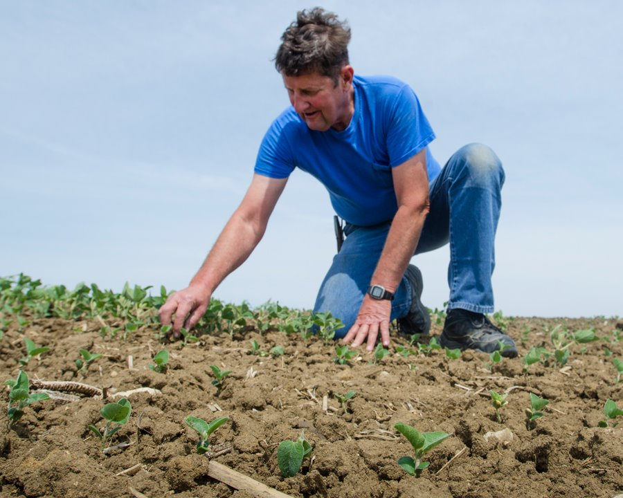 Roger Van Ersvelde checks the conditions of his soybean field. (Photo: Joseph L. Murphy)