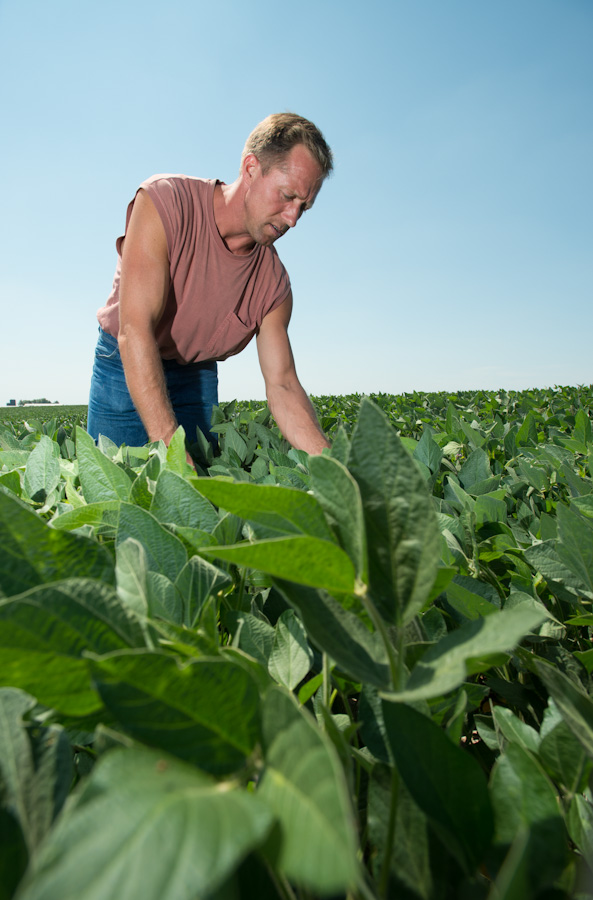 Gary Burken scouts one of his soybean fields near Clinton. Burken is happy with his beans and is hopeful that rains in August will fill the pods. (Photo: Joseph L. Murphy)