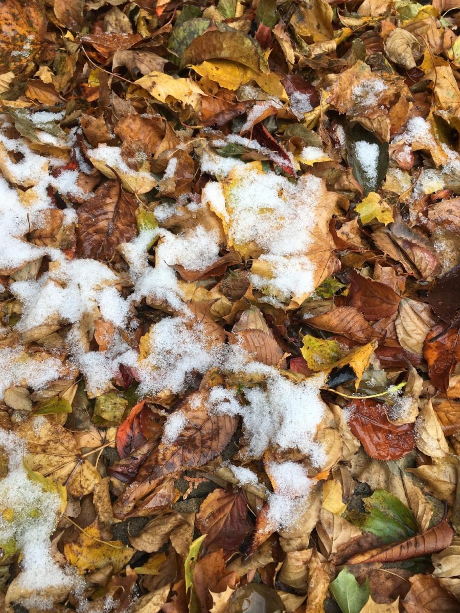 Snowy leaves blog.jpg