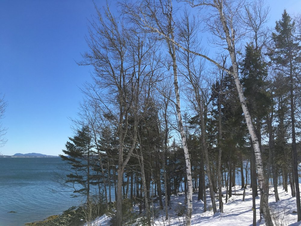 A quick visit Downeast revealed this beautiful view of Contention Cove in Surry. The hills of Southwest Harbor on Mount Desert Island are visible in the distance. A roaring fire in the wood stove, laughter and good meals with friends. Ahhhh....