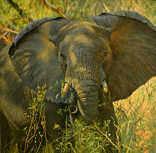 Elephant at my camp