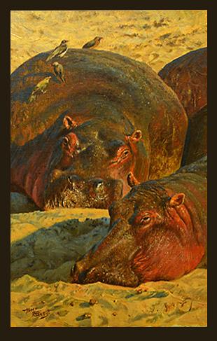 Hippos, Lower Zambezi