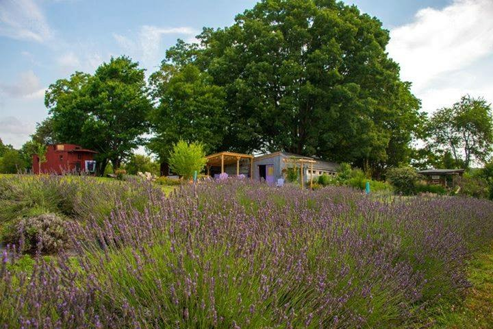 Evergreen Lavender Farm