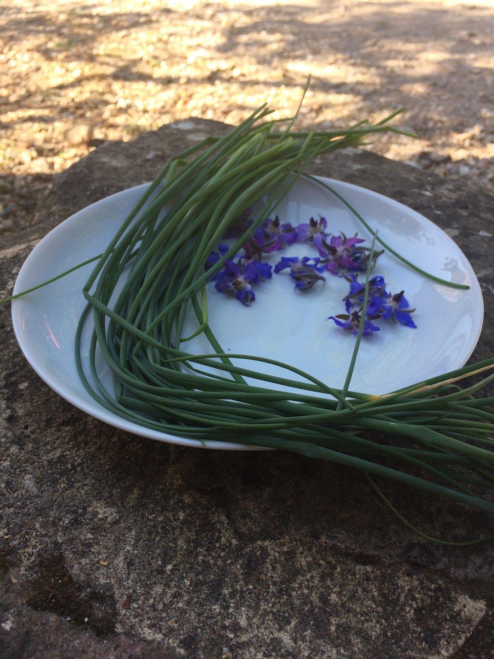 Midderigh Vox fresh herbs.JPG