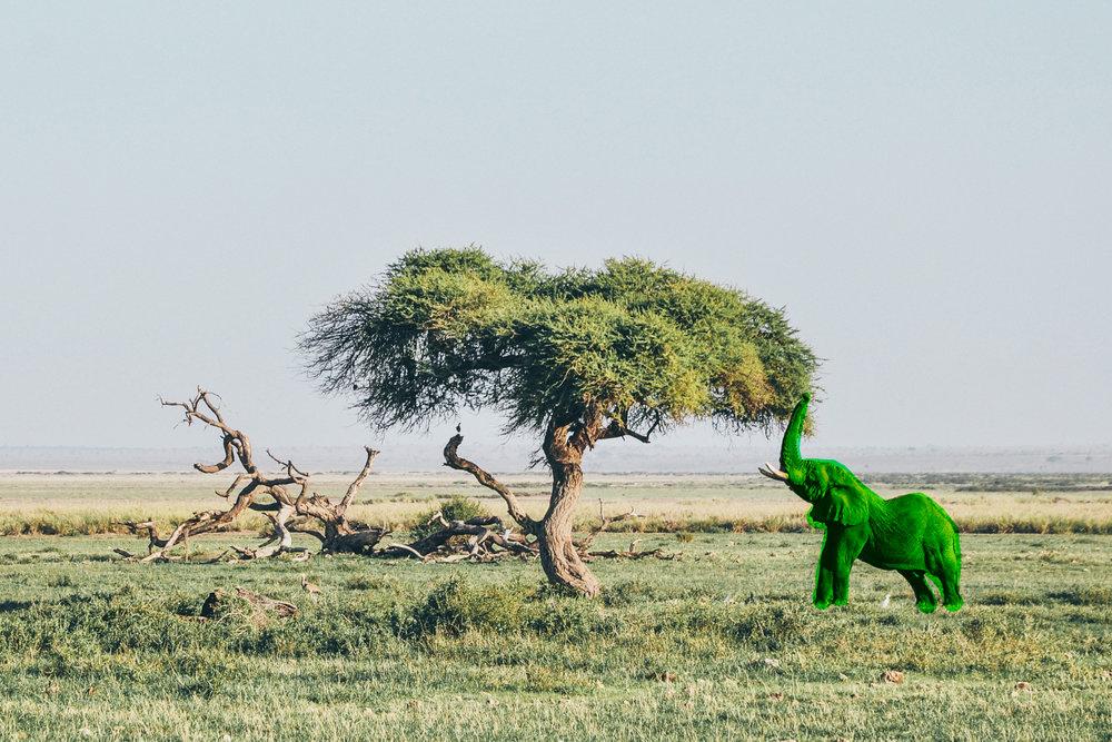 Jator Elephant.jpg