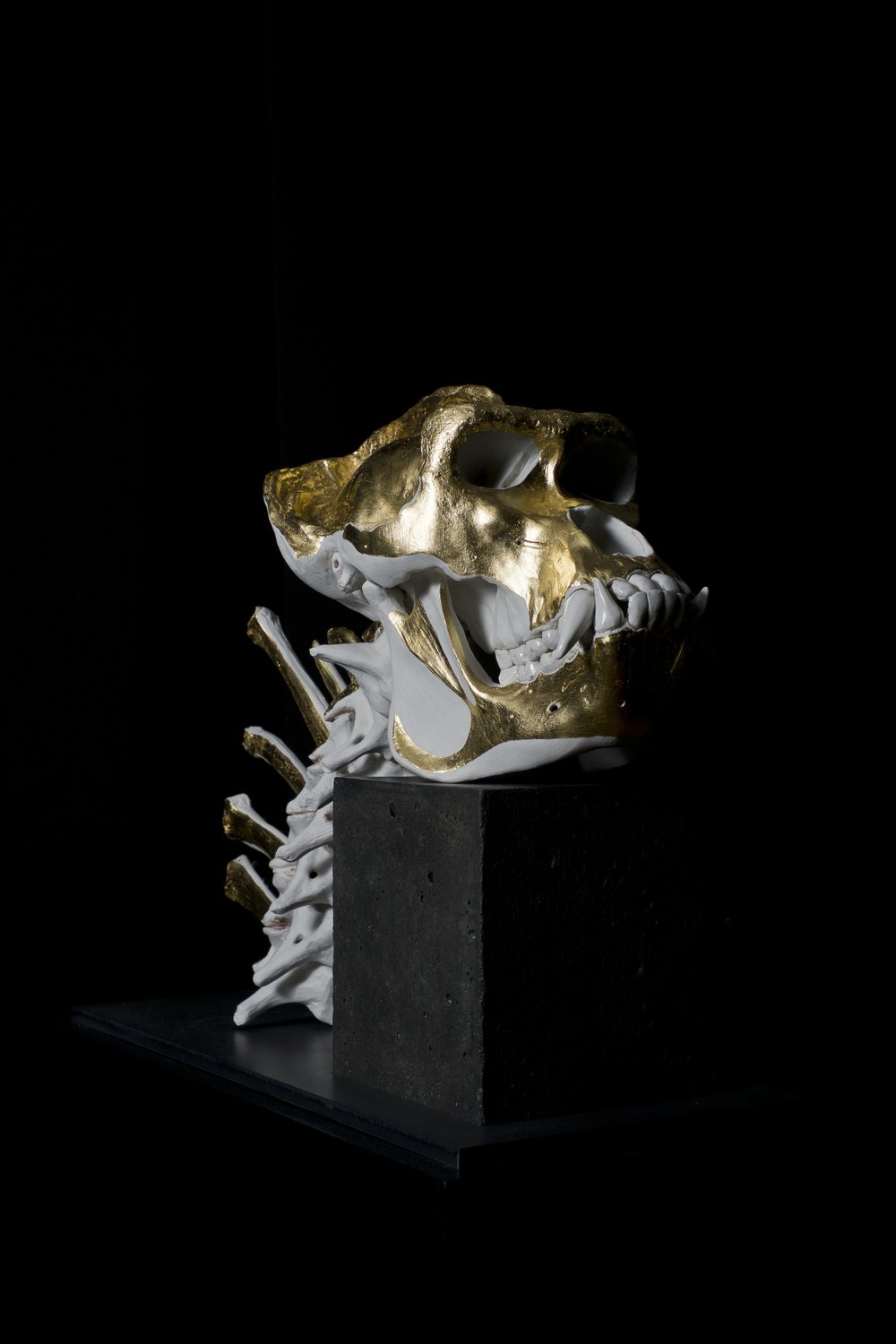 JAMES WEBSTER GORILLA SKULL