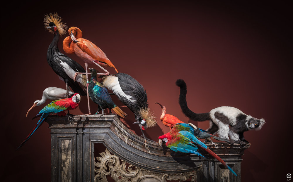 Darwin Sinke van Tongeren Art Sablon Gallery and Cabinet de curiosite Bruxelles