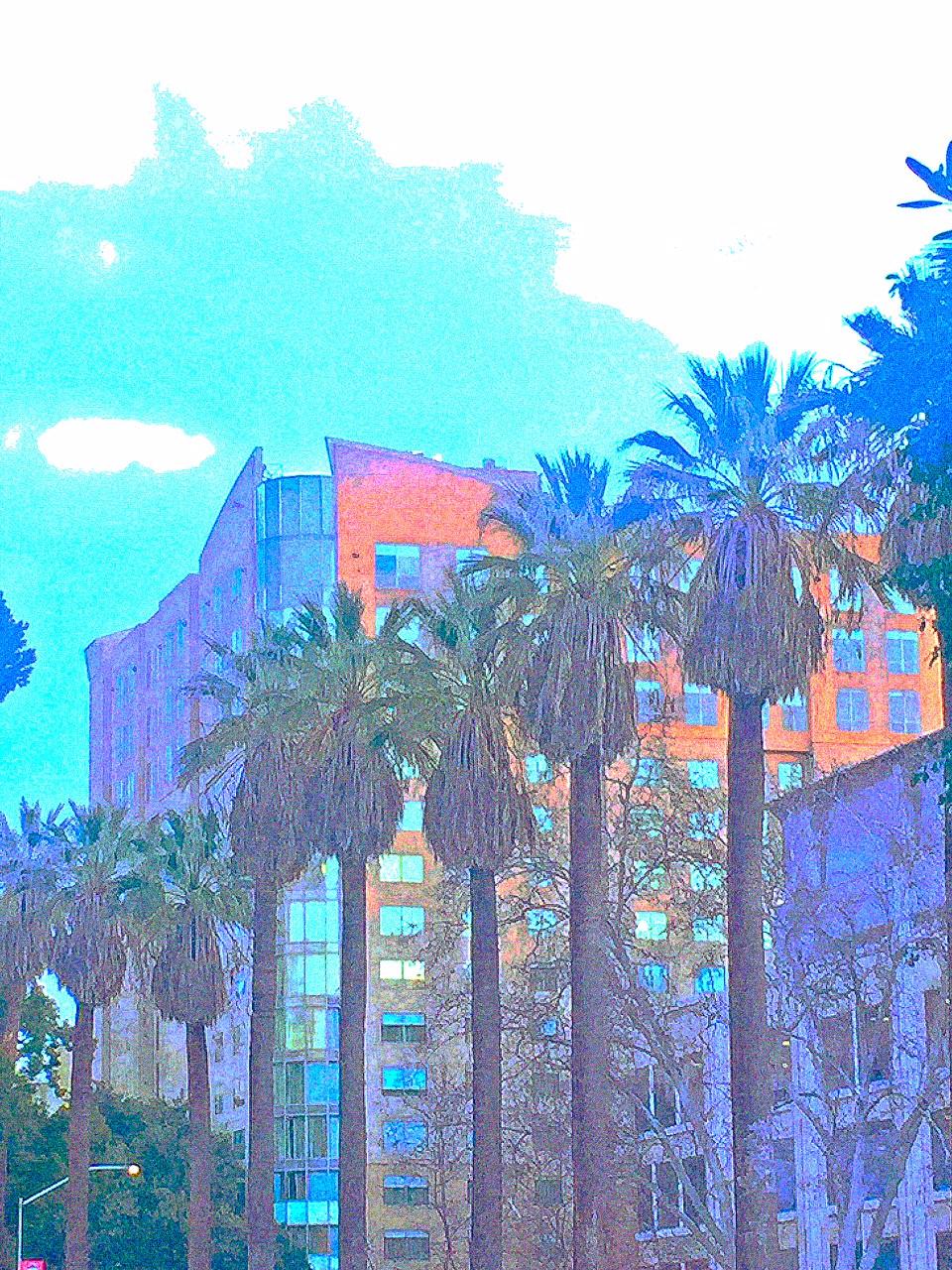 Keleidoscope Palms