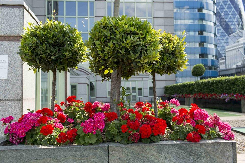 fscs-age-friendly-employer-renegade-generation-roof-terrace-1.jpg
