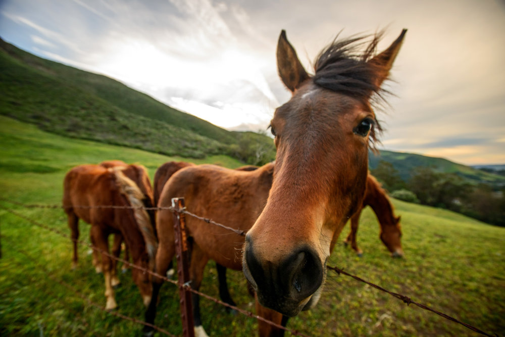 horses_cal_poly_san_luis_obispo_brittany_app