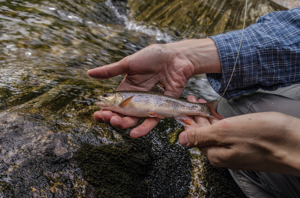 Waterfalls and Brook Trout