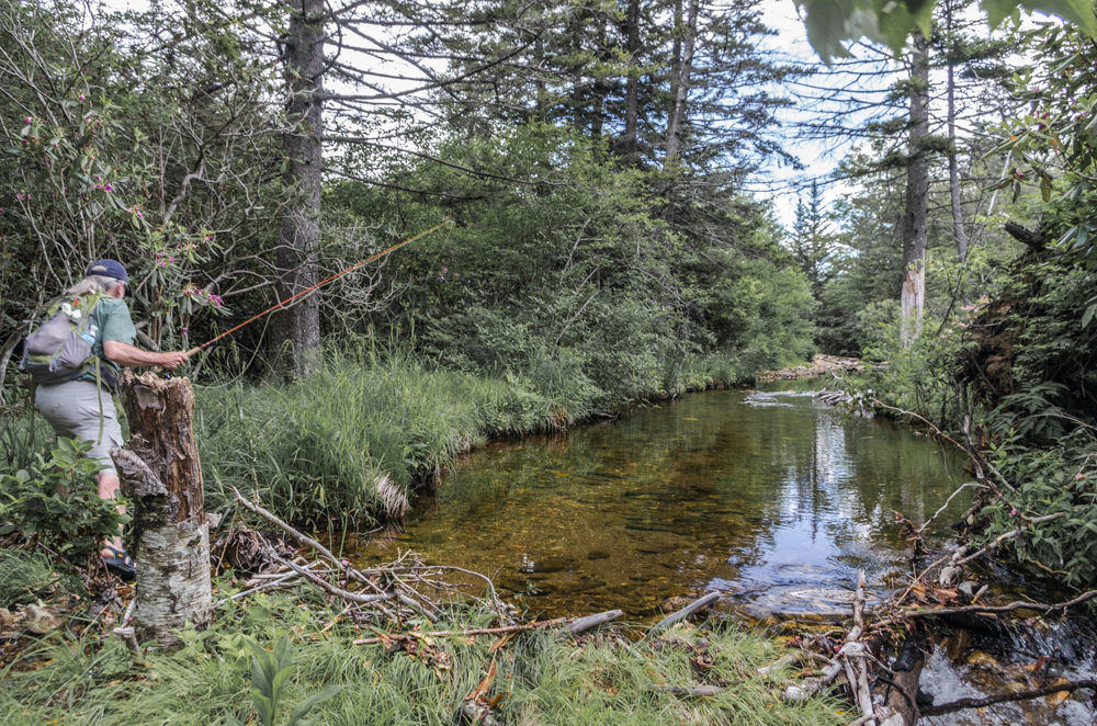 Fly Fisherman Stalks Brook Trout