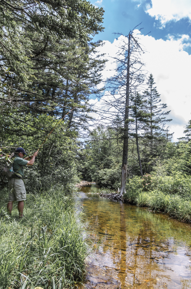 Catching a Brook Trout