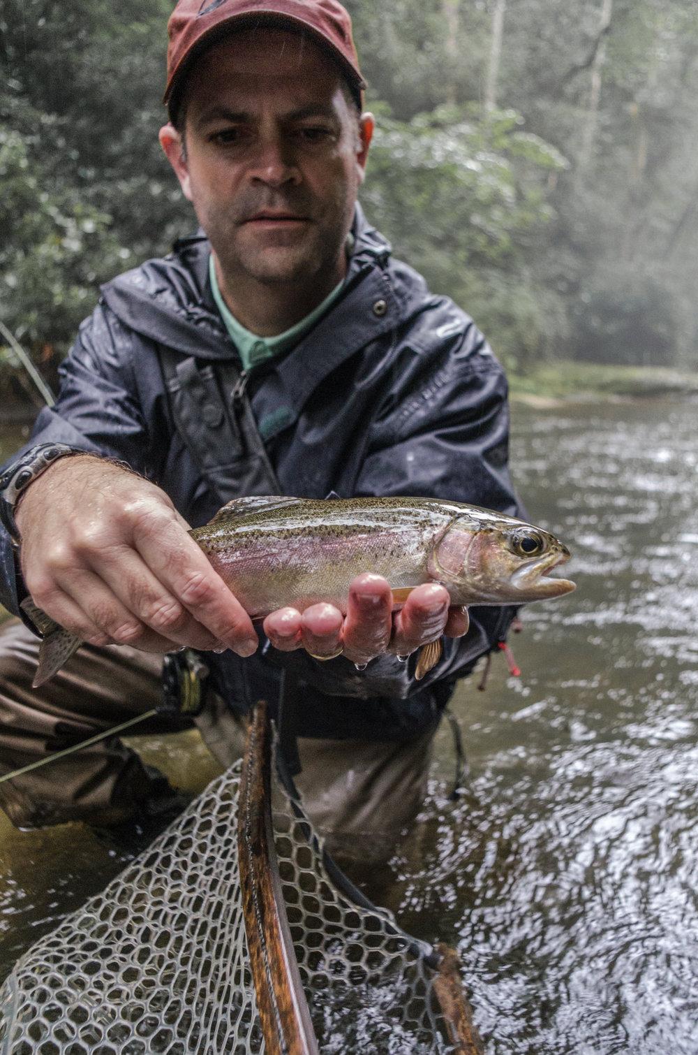 Davidson River Rainbow Trout