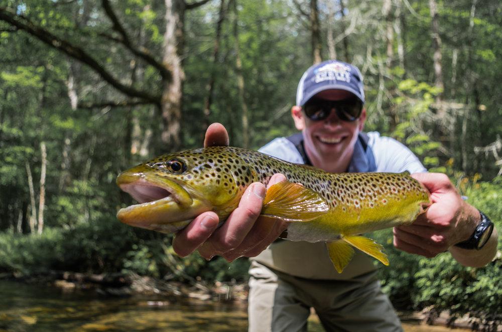 Healthy Davidson River Brown Trout