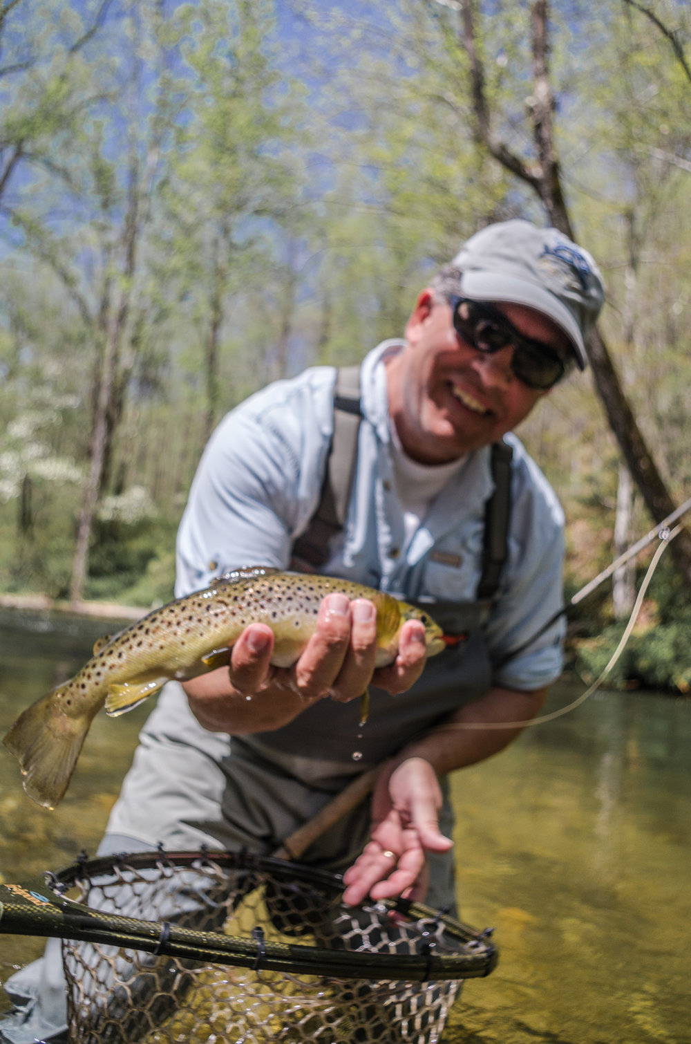Brown Trout from The Davidson River