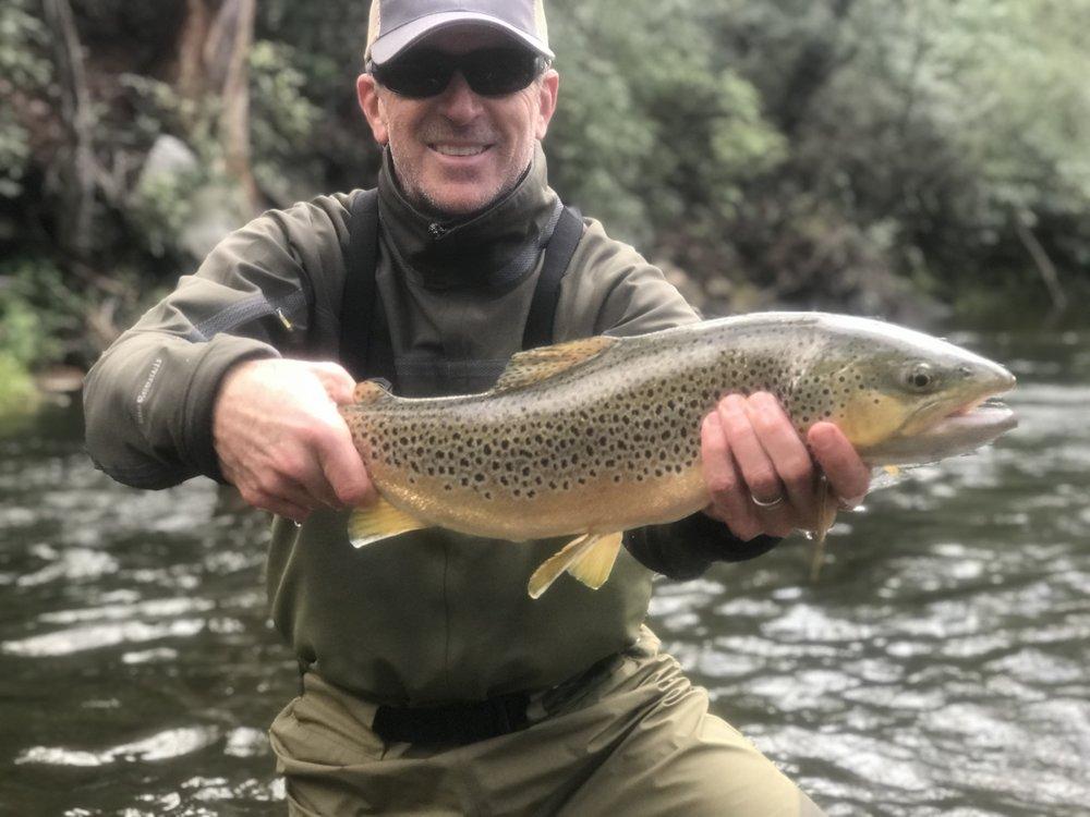 Davidson River Brown Trout