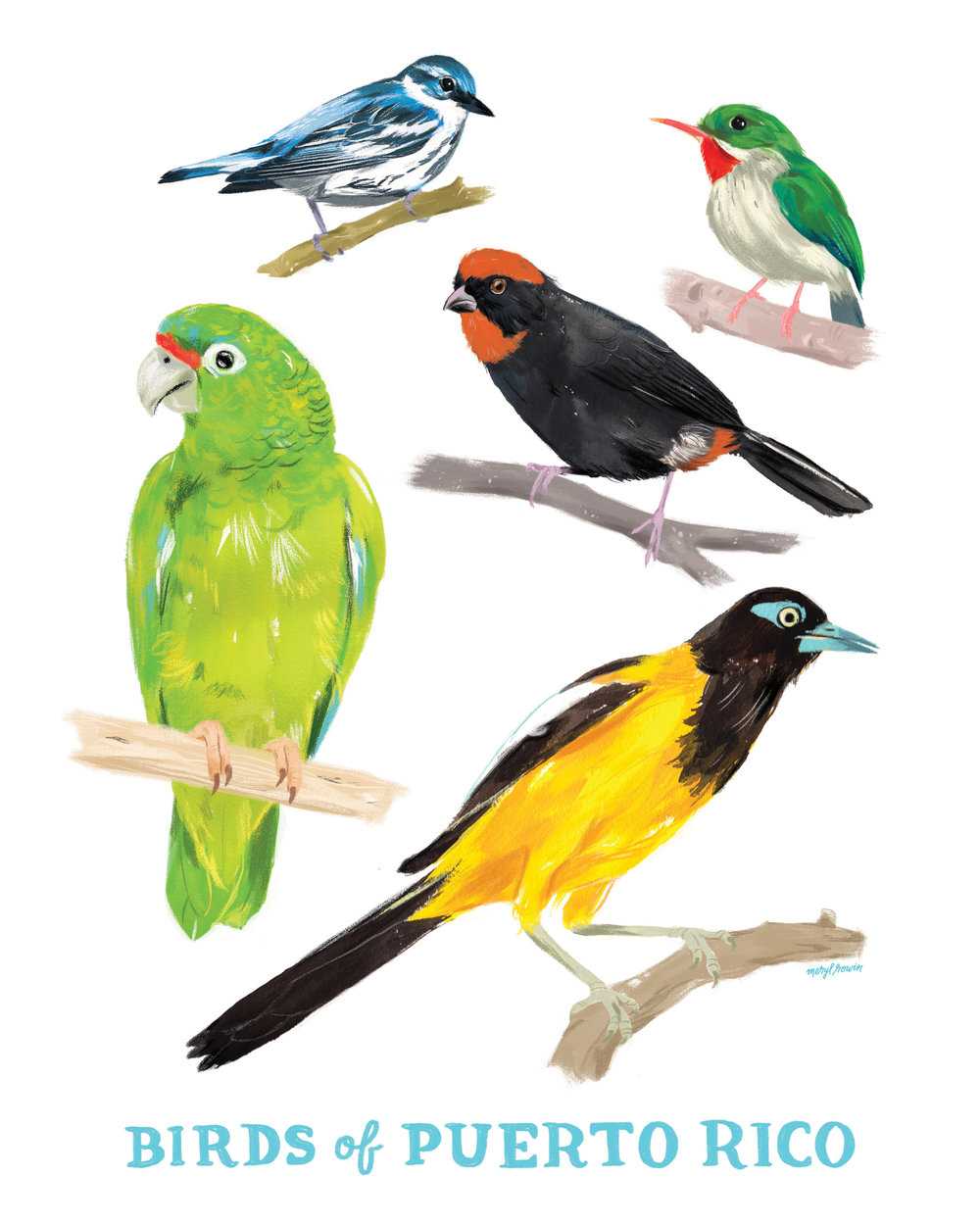 Birds of Puerto Rico  - *All Proceeds Benefit Puerto Rico Hurricane Relief* Birds of Puerto Rico 8x10