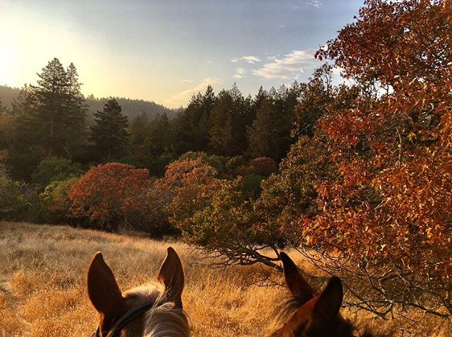Sunday sunset strolls with Allegre the horse and April the Mule. Photo by our head designer and creator, Claudette. #cloudranch 🍁