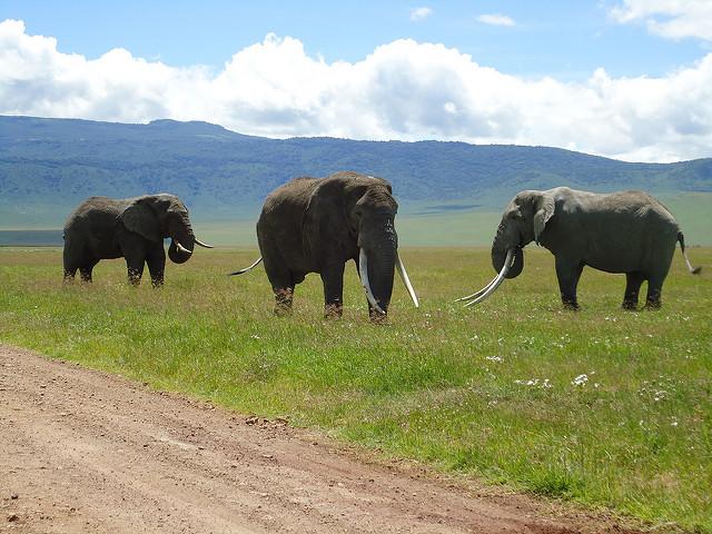 Elehathi Elephant.jpg