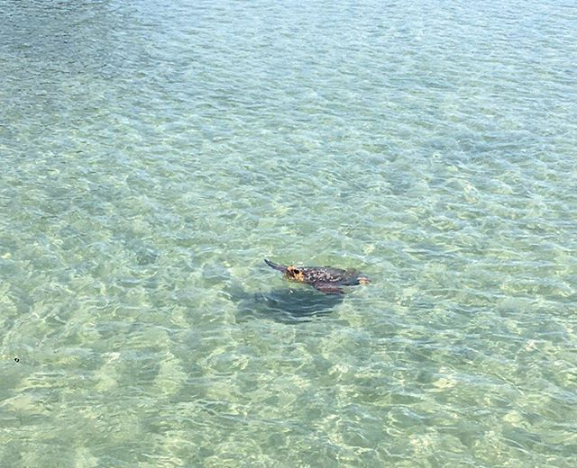 Cruising through the weekend like this guy... 🐢✨#weekends #areforthesoul