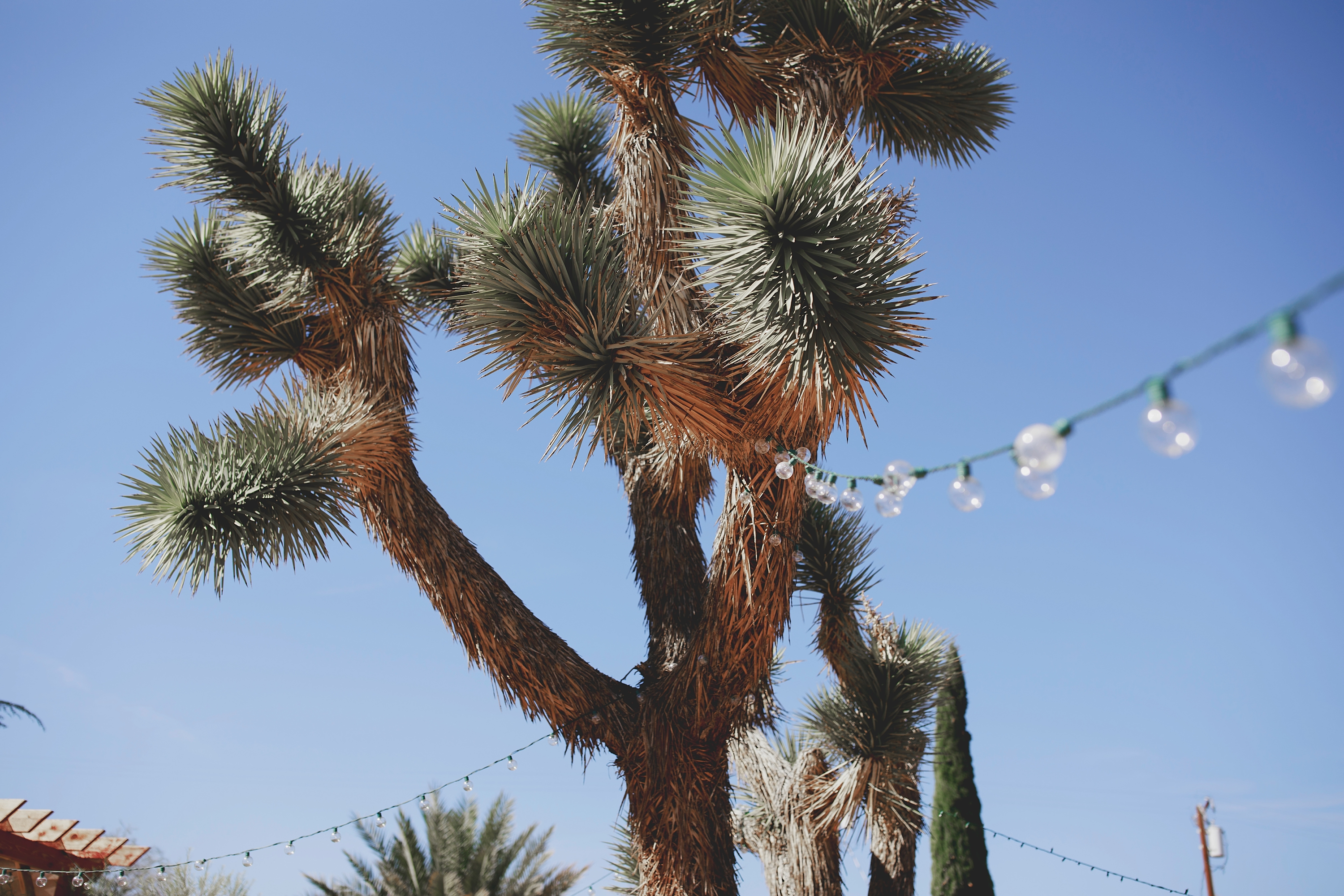 amanda_vanvels_joshua_tree_inn_wedding_014.jpg