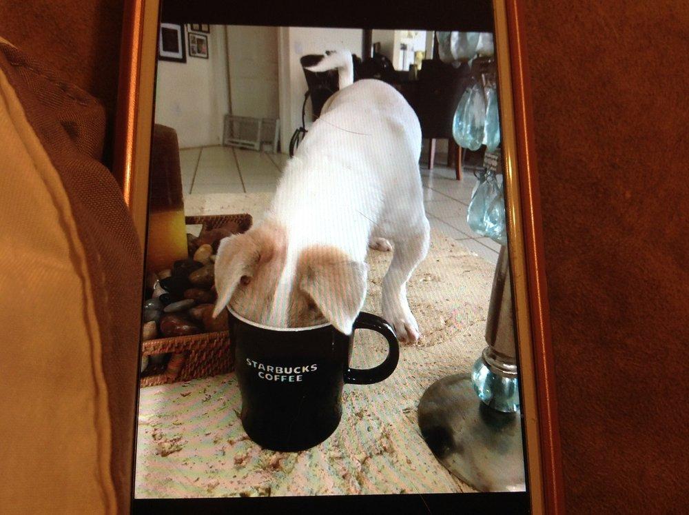 IMG_3512 Puppy Dreams Come True.jpg