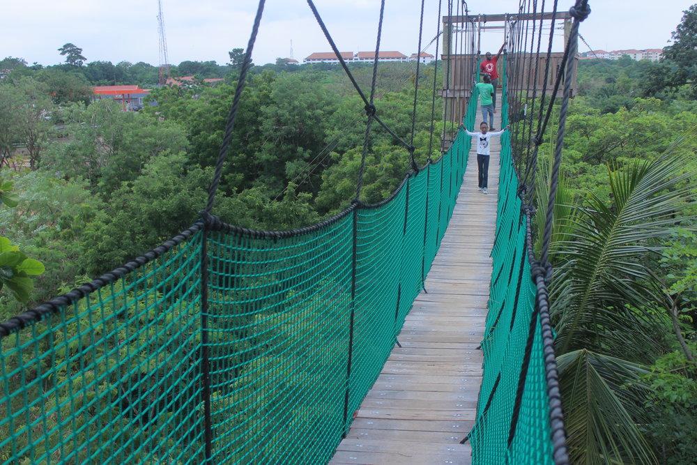 Canopy Walk -