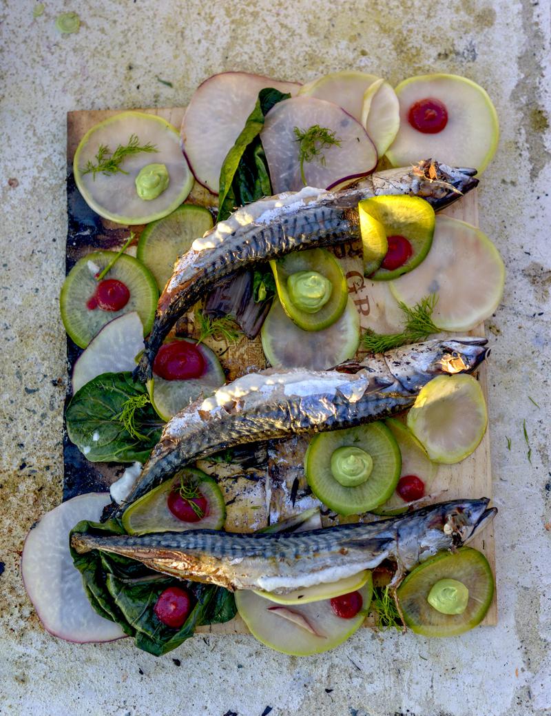 plank nailed mackerel_0463.jpg