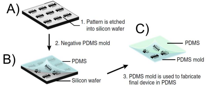 Figure 2.  Workflow of Moolman device. A) The patterns are etched into the silicon wafer after the negative resist has been patterned with the electron beam. B) A negative replica of the structures on the silicon wafer is transferred into a PDMS mold. C) The PDMS mold made in B) is used to pattern the final device onto the PDMS. The final pattern on the PDMS is identical with the pattern on the silicon wafer. The figure was taken from (5)