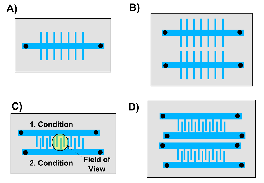 Figure 4.  Overview of mother machine designs we want to test. A) The classic mother machine device published by Wang and co-workers. B) This device has two mother machines on one chip. C) In this device two growth channels with different conditions and strains can be image in one field of view (radius = 600 µm). D) A combination of B) and C).