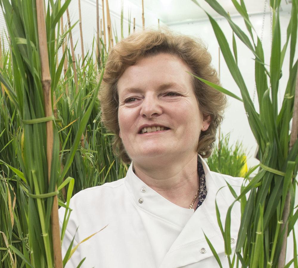 Prof Wendy Harwood