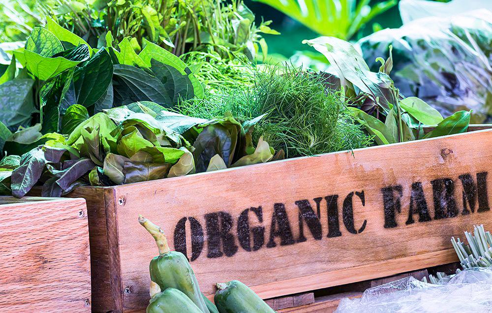 organicblog.JPG