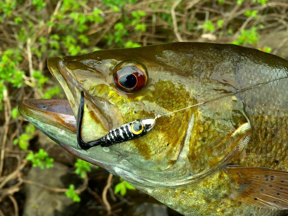 Bass and Panfish -