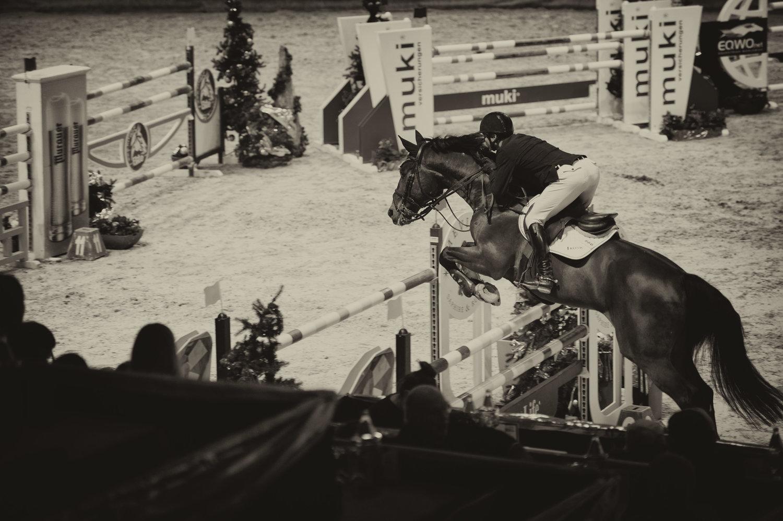 Mevisto Amadeus Horse Indoors Salzburg Horse Truck
