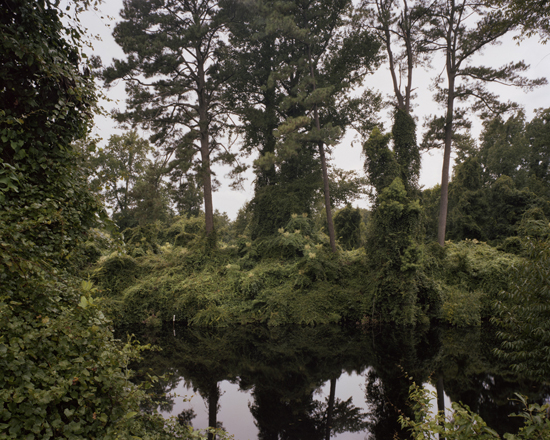 The Great Dismal Swamp, Virginia/ North Carolina border, 2009 | Dana Mueller