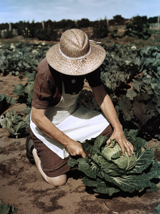Virginia Norris with homegrown cabbage, one of the many vegetables which the homesteaders grow in abundance.