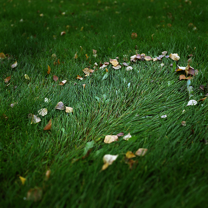 The Lawn, from the series The Idea of North
