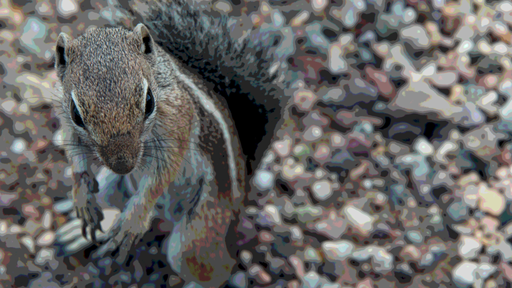 My lucky encounter with a squirrel in Arizona desert. Posterized to 8 levels.