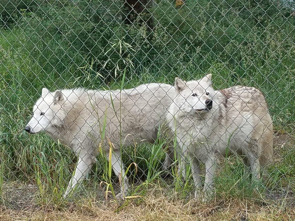 Wolf Haven Tour.jpg