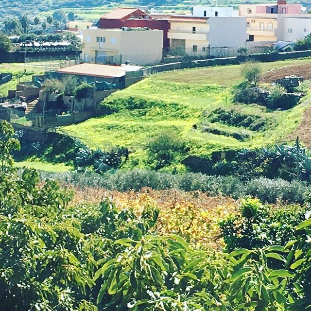 #canaryislands #countryside #farmtotable #foodfromtheearth