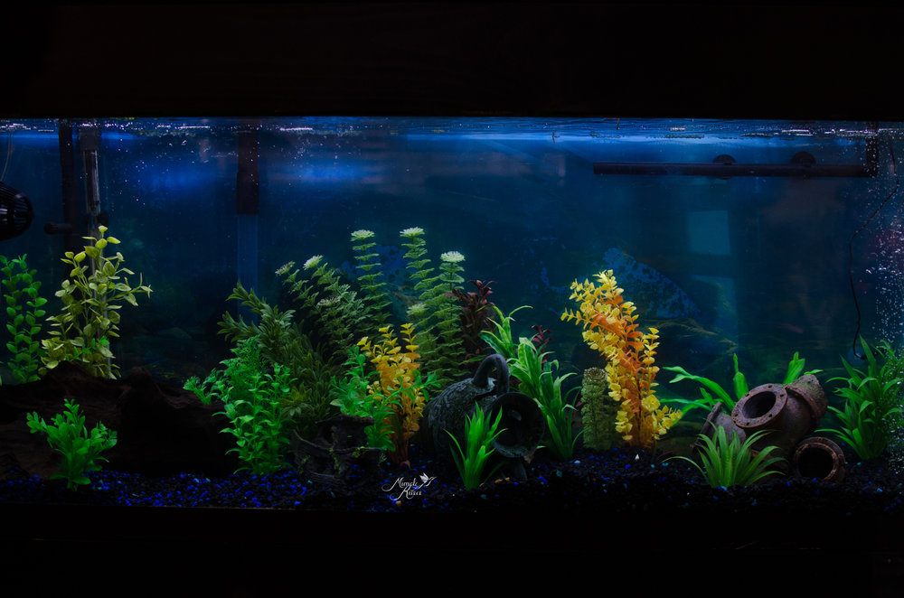 crisp, clean fish tank, blue lights