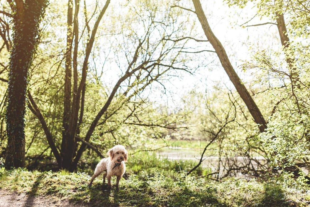Spring Engagement Photos with Dog - Kate Jackson Wedding Photography