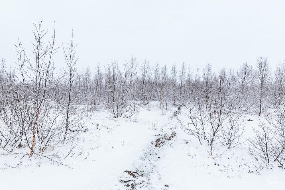 Iceland Travel Photography - snow trees