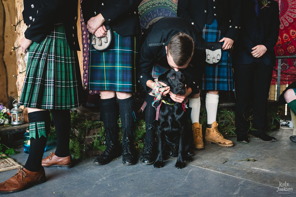 Groomsmen in kilts, with one groomsman kissing labrador dog with bow at fun Festival Wedding in Shropshire