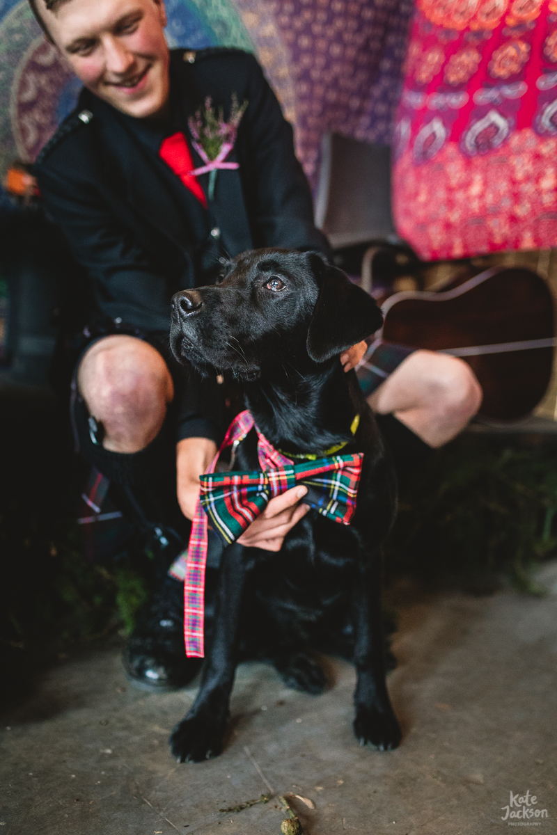 Labrador Dog at Scottish DIY Festival Wedding with Bowtie | Kate Jackson Photography