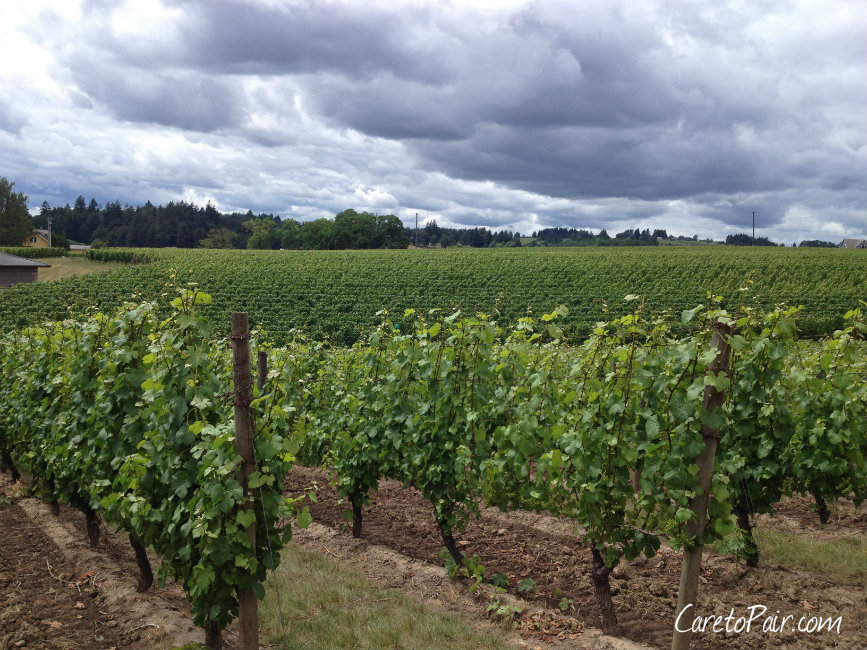 Oregon Willamette Vineyards and a Wine Pairing | CaretoPair.com
