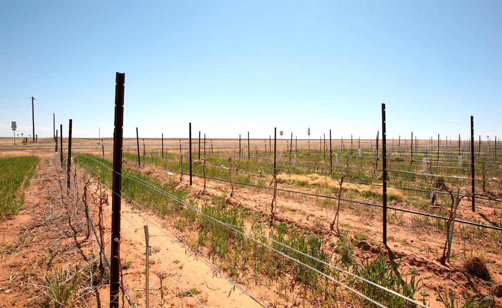 Paka Vineyard looking out.jpg